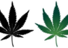 THE DRAWBACKS AND BENEFITS OF LEGALIZED CANNABIS